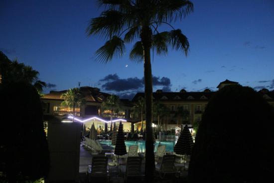 Orfeus Park Hotel: пальма