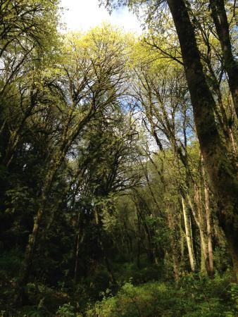 Saint Edward State Park: Edward State Park Hike