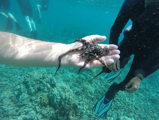 What Is The Best Snorkel Tour In Kauai