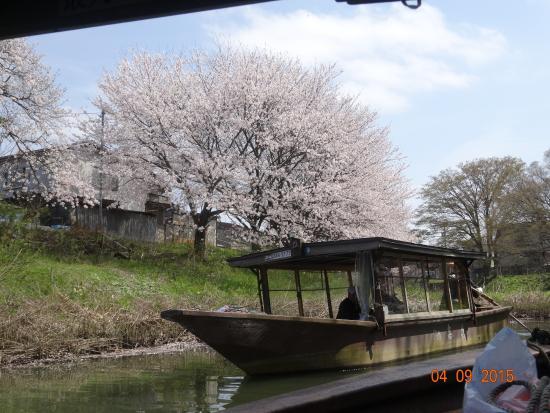 Daishoji Area: 桜と屋形船