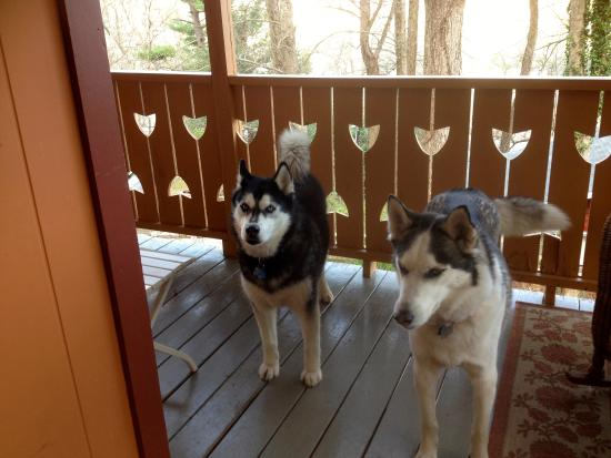 Asheville Swiss Chalets: Maya & Zia love vacation at Lucerne