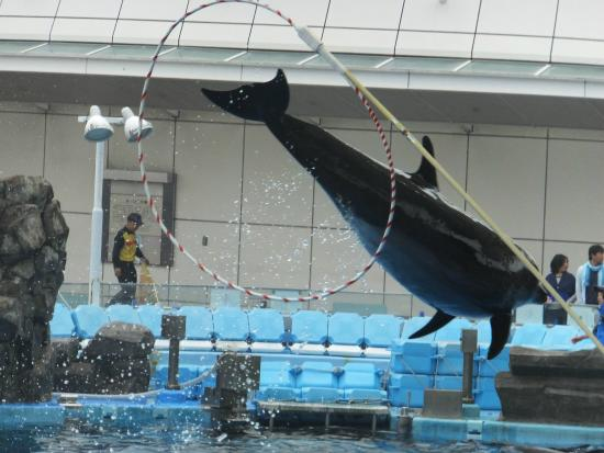 ... show - Picture of Port of Nagoya Public Aquarium, Nagoya - TripAdvisor