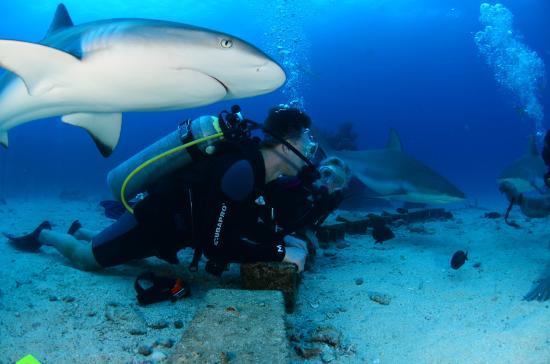 Simpson Bay, St-Martin/St Maarten: Shark Dive