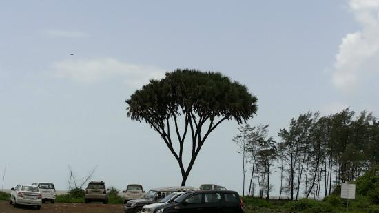 Nagaon Beach: Car parking under the nice looking tree