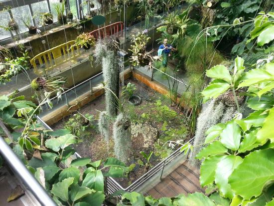 Invernadero picture of royal botanic garden madrid tripadvisor - Jardin invernadero ...