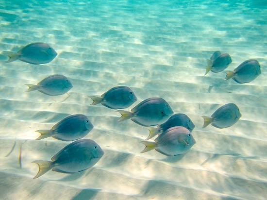 Coral Gardens reef fish Picture of Beach House Turks Caicos