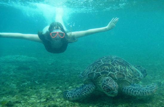Apo Island Marine Reserve : снорклинг с черепахой