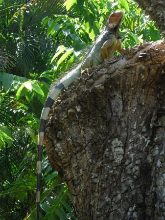 Villas Hermosas: Tons of wildlife right outside your front door