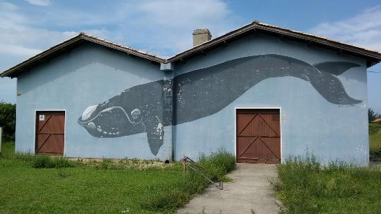 Imbituba Whale Museum