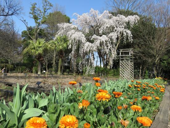 Kenmotsu Daijumoku Garden