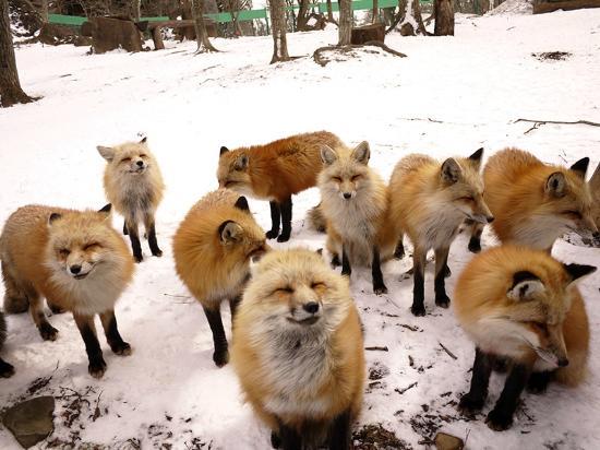 Miyagi Zao Fox Village