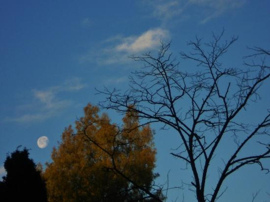 Antico Casale : Luna tra gli alberi