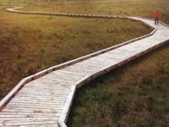 Clara Bog Boardwalk