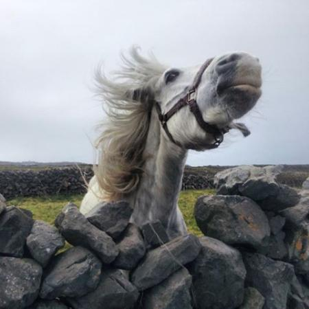 Mary Joe's B&B : One of the many friends you will make on Inishmore