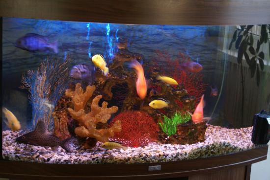фото с рыбами