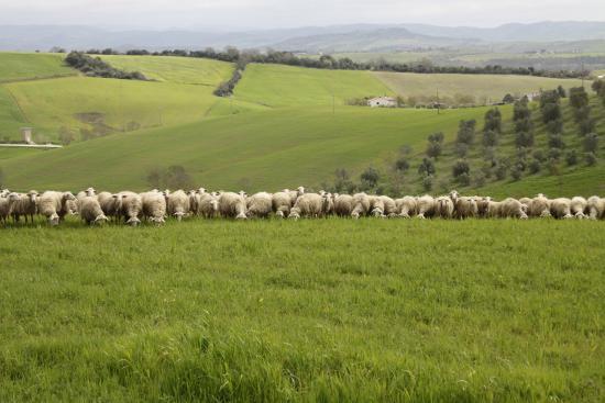 Agriturismo I Gretacci: D'intorni dell'agriturismo