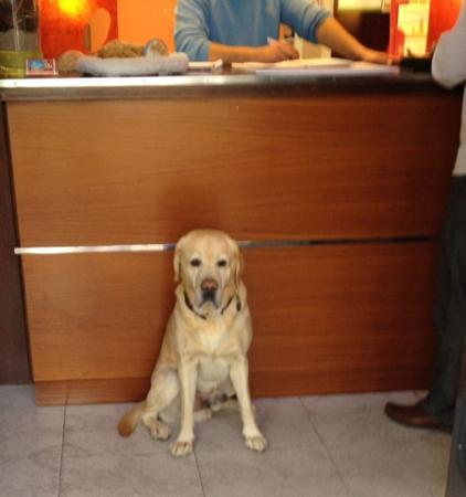 Hotel Los Globos: Gary the friendly resident labrador