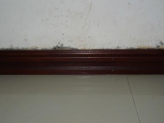 AV Hotel: mold