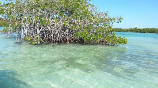 Bayahíbe, República Dominicana: Manglares