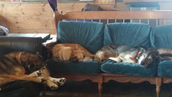 Eden Mills, VT: resting up