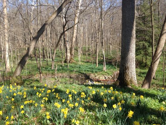 Aullwood Garden MetroPark: Spring time