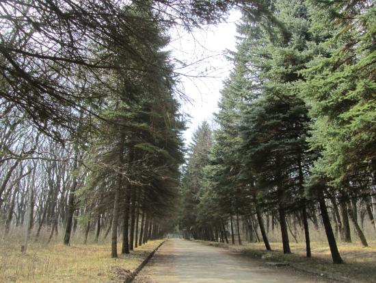 Park Pobedy (Angliyskiy Park)