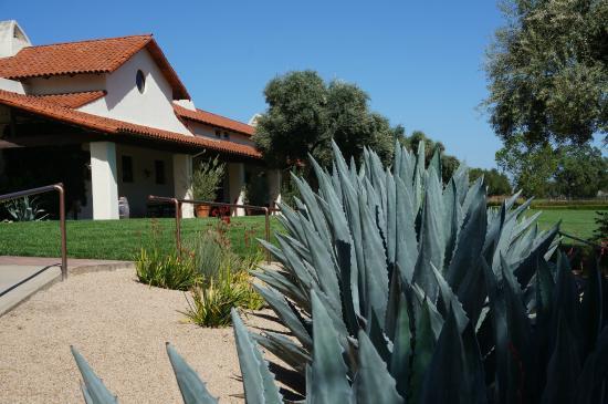 Bridlewood Estate Winery: Cacti