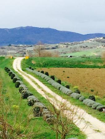 Country House Casco Dell'acqua: La via delle lavande.