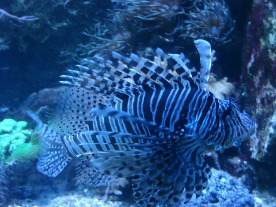 Aquarium Mare Nostrum: Poissons de tous les océans
