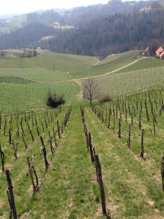 Weinlandhof: Views from the wine road