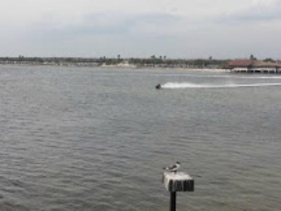 Sailport Waterfront Suites: Jet Ski Rental Across The Bay