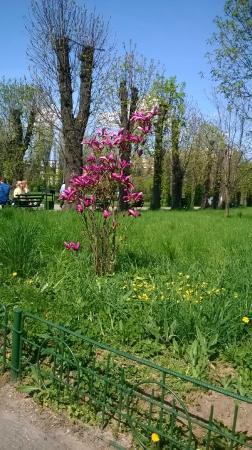 The Botanical Garden (Gradina Botanica): Flowers