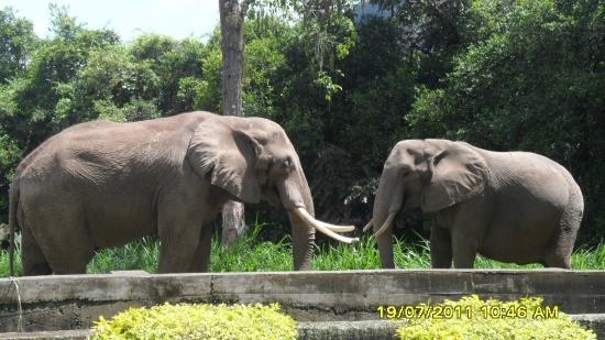 Matecana City Zoo