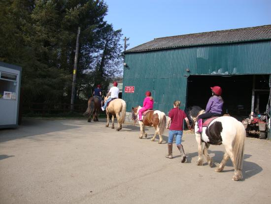 Anglesey Riding Centre : Riders being led during a session.