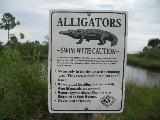 Indian Pass Campground : The alligators ate before we came! Nevertheless I prefered to take a swim in the sea!