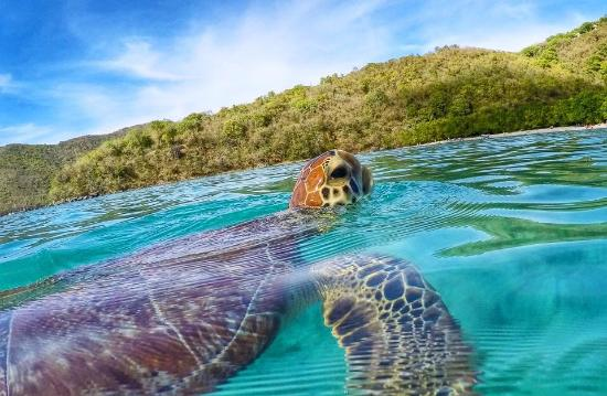 St.Thomas Scuba and Snorkel Adventures: Swimming with turtle