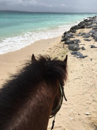 Iejima Beach Side Horse Park