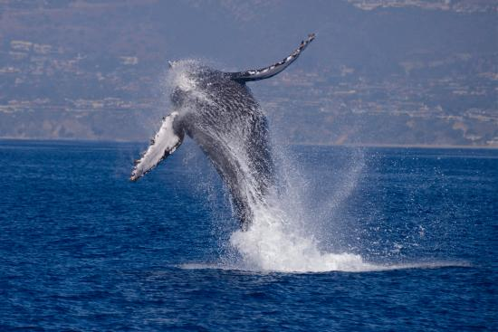 Dana wharf whale watching sportfishing dana point ca for Fishing dana point