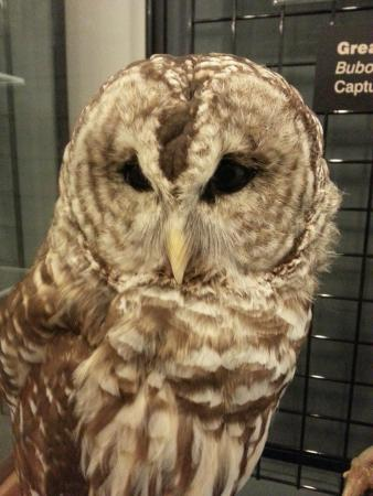 World Center For Birds of Prey : A wonderful learning experience for the whole family!