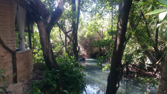 The Sands At Chale Island: Mangroves