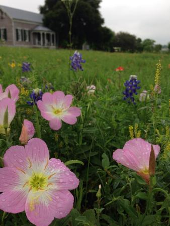 Cedars Cabins: Gorgeous flowers all over