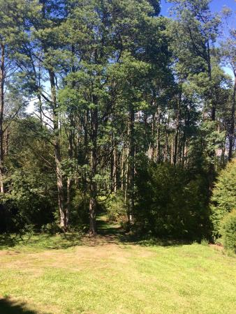 Lyrebird cottages : The view from the private balcony
