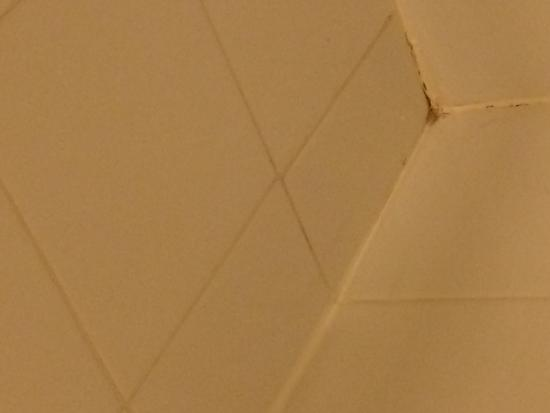 Hilton Garden Inn Augusta: mold in shower