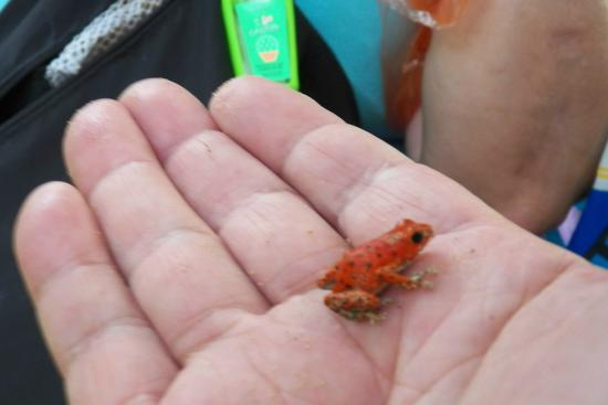 Red Frog Beach: RANA1