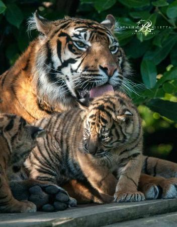 Chester House Guest House: Kirana and one of her cubs