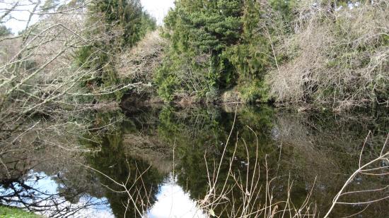 Glengariff Woods: De zon weerspiegelt de bomen en struiken in het water