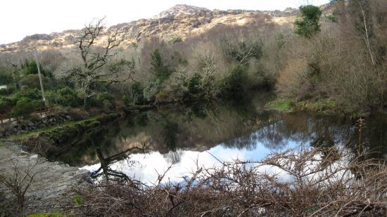 Glengariff Woods: Een plekje waar je alleen op de wereld lijkt te zijn