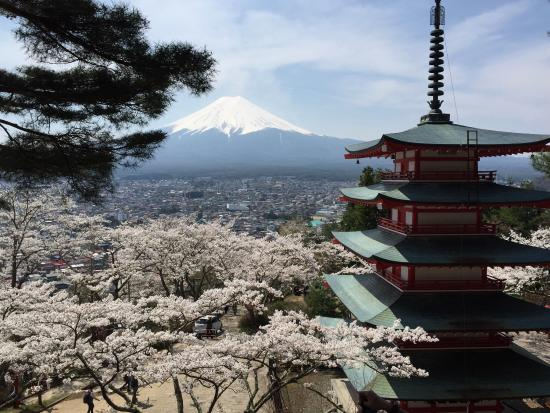 Fujiyoshida, Japan: During Cherry blossom season at Mount Fuji