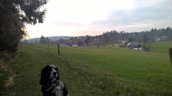 Blick vom Wald auf den Schäferhof