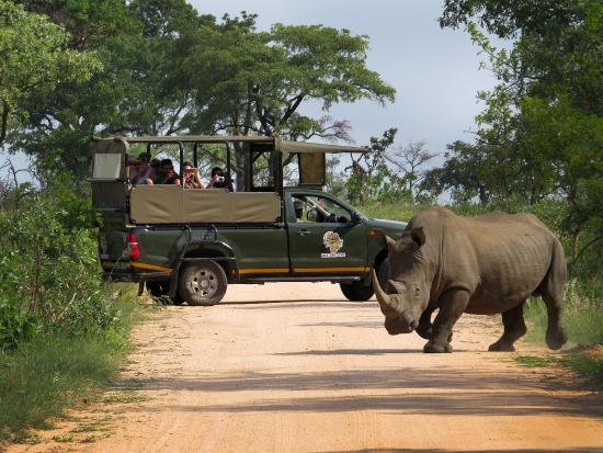 Kurt safari - Picture of Kruger National Park, South Africa